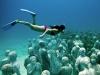 Cancun-sculture-sottomarine