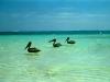 beach-puerto-morelos