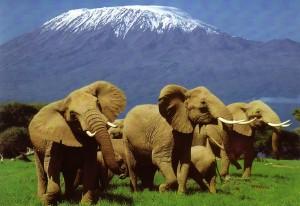 kenya offerte, kenya safari