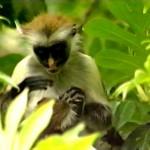 Jozani Natural Forest Zanzibar