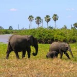 Selous Gama Reserve-Zanzibar