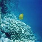 Zanzibar barriera corallina